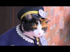 Tama the cat: 3,000 attend elaborate funeral for Japan's feline stationmaster | World news | The Guardian