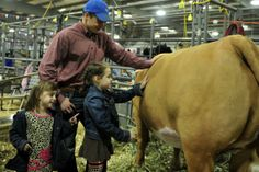 Brynna and D'Laney Holifield help Ryder Sawyer (center) with his steer during Tuesday's stock show. This is Sawyer's third year to show in the San Angelo Stock Show. He is a member of the Iraan FFA.