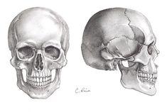 Badass Drawings, Skeleton Drawings, Skeleton Art, Art Drawings, Anatomy Sketches, Anatomy Drawing, Anatomy Art, Figure Drawing Practice, Skull Anatomy