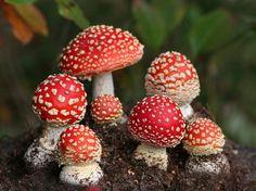 7 dos cogumelos mais bizarros do planeta