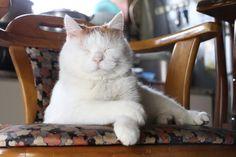 うでぐみ - かご猫 Blog