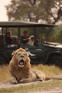 Die einen gespannt, der andere völlig unbeeindruckt | © andBeyond Nxabega Okavango Tented Camp
