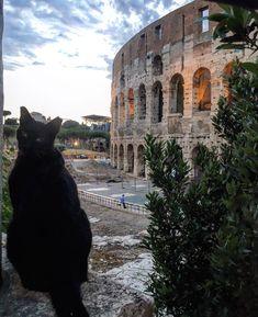 Io so' Romeo... ❤️#ermejodercolosseo #romeo #colosseo #italy #roma #city #visititaly  #amor #gatti #gattidiroma #spettacolo #love #igersroma #architettura #nuvole #instagood #instadaily #instaphoto #instalove #instaroma
