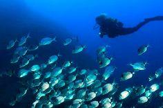 L'Estartit y las Islas Medes lugar favorito para hacer submarinismo