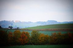 Udsigt i efterårsfarver ved Haarby #visitfyn #fyn #visitdenmark #naturelovers #natur #denmark #danmark #dänemark #landscape #nofilter #sky #assens #haarby #mitassens #forrest #fynerfin #skov #fields #visitassens #picoftheday #autumn #efterår