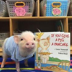 Priscilla & Poppleton: The Mini-Pigs Taking Instagram by Storm!