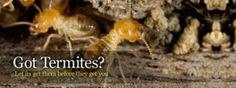 Scottsdale Termite Control