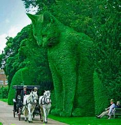 "Many people believe that huge topiary like this ""Watchful Cat"" are real. It's beautiful but it does not really exist in topiary. It is a work of art by surrealist Richard Saunders. You can find out more about his work by researching ""The Topiary Cat""."