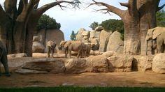 Bioparc zoo.