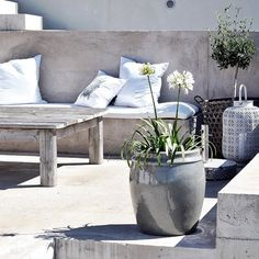 tuinplant - knus zithoekje - tuindecoratie - garden - deco - pots - plants