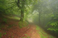 NEBLINA EN EL HAYEDO - Foto realizada en Forêt D´Haira / Francia, muy cerca de la frontera de España