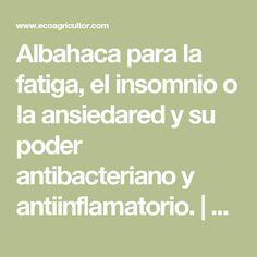 Albahaca para la fatiga, el insomnio o la ansiedared y su poder antibacteriano y antiinflamatorio. | ECOagricultor