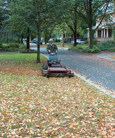 Improve Your Soil by Raking Less: Mowing leaves into your lawn can improve its vigor, and unraked leaves in planting beds don't smother shade-tolerant perennials. Read how, here http://www.finegardening.com/how-to/articles/improve-soil-rake-less.aspx#