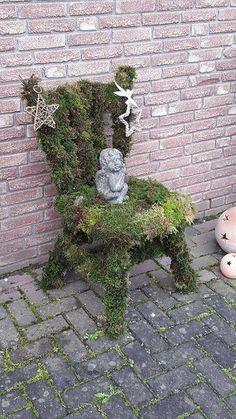 Alter stuhl bepflanzt mit hauswurz deko pinterest - Bepflanzter stuhl ...