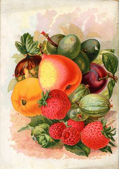 Fruits - Seed Catalogs from Smithsonian Institution Libraries