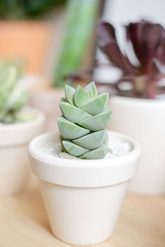 Most current Free of Charge cactus plants indoor Thoughts Succulents along with cactus are the ideal residence decorations pertaining to minimalists in addition to dev Succulents Wallpaper, Succulents Drawing, Types Of Succulents, Colorful Succulents, Planting Succulents, Succulents Painting, Tall Succulents, Indoor Succulents, Indoor Herbs