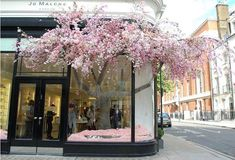 "CELEBRATING CHELSEA, during the week of the RHS Chelsea Flower Show many shops organize the most amazing flower installations in their windows. It is no surprise that purveyor of the most delicious scents @jomalonelondon had this spectacular ""Blossoming"" tree and I am pretty sure it is the ever talented @nikkitibbleswildatheart who was responsible #flowerporn #jomalone #blossom #spring #petal #bloom #florist #chelseaflowershow"