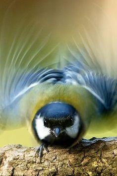 I'm like a bird. I'll only fly away.