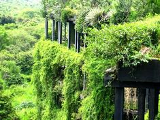 Kandalama Hotel, Dambulla, Sri Lanka. Architect: Geoffrey Bawa.  Photo via Greenroofs.com.