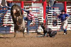 Willits Rodeo, Willits, CA