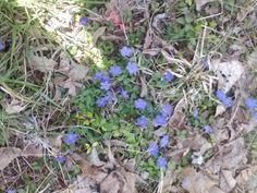 God's flowers.