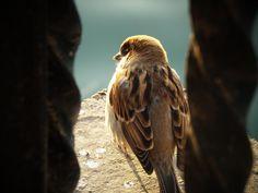 the bird..