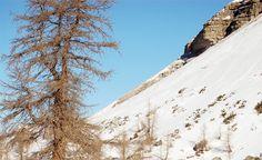 WHITE DAYS | MALGA VAGLIANA | SNOWCAMPITALY | Malga Vagliana conserva sempre un fascino particolare; l'anfiteatro sotto la cima omonima rappresenta l'arena nella quale confrontare il proprio ego con il severo ambiente della montagna. Il fantastico fronte di discesa esposto a nord offre emozioni uniche, anche nelle stagioni meno nevose grazie alla presenza costante della powder. snowcamp.it