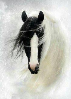 (91) Horses & Freedom - Photos
