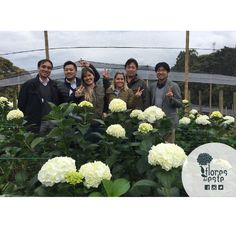 We had a visit from one of our top customers from Japan, Among all these #hydrangeas, it was really easy to have a good time #Colombia #Tierradentro