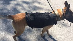 Proto of a new vest for Finnish Police K9  Copyright: Poliisi.