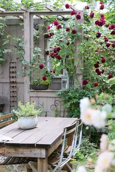 Outdoor eating and a deep red rambling rose, so pretty.