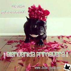Bienvenida Primavera! !!   #primavera #URUGUAY #bde #spring  www.bde.com.uy
