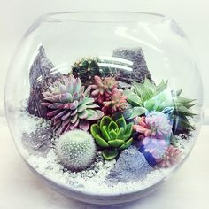 Bioattic Terrariums are beautiful miniature landscapes, a slice of nature housed in glass. Terrariums are perfect for adding stunning plant life to your home or office. Below showcases a brief selection of Desert World  Forest World…