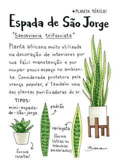 Eco Garden, Garden Care, Green Garden, Cactus Plants, Garden Plants, Indoor Plants, Saint Georges, Plants Are Friends, Witches