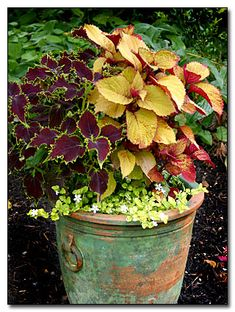 Planter from the Rainy Side Gardeners' website. They have many beautiful container ideas!  http://rainyside.com/container/