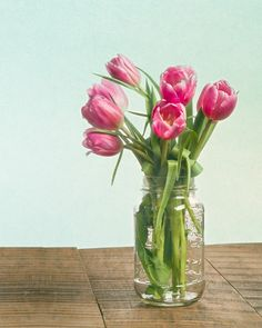 Bouquet of pink tulips in a mason jar. Fine Art Still Life Photography Print for Home Decor Wall Art. Pink tulips in a clear mason jar vase. Still life of fresh tulip flowers. ~~ SELECT DESIRED SIZE USING THE OPTIONS BUTTON ABOVE ADD TO CART. Available in: 5x7, 8x10, 11x14, 12x18, 16x24, 20x30, 24x36 prints.