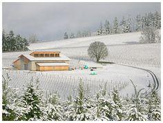Shea Wine Cellars & Vineyard