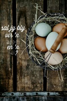 They they may all taste the same once cracked, there's no denying that brown and soft blue hued eggs just look so much more beautiful than their average white counterparts while still in the shell.I miss farm fresh Decoration Inspiration, Color Inspiration, Photo Bleu, Down On The Farm, The Ranch, Color Pallets, My New Room, Farm Life, House Colors