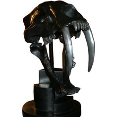 Lifesize Sabre Tooth Tiger Skull | From a unique collection of antique and modern sculptures at http://www.1stdibs.com/furniture/more-furniture-collectibles/sculptures/