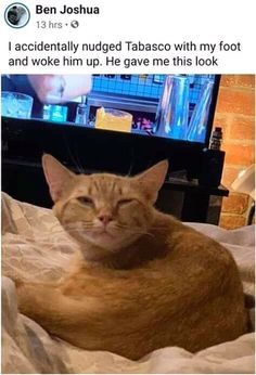 Giant Mid-Week Kitty Litter That Requires Clearing Memes) - World's largest collection of cat memes and other animals Funny Animal Jokes, Funny Animal Pictures, Cute Funny Animals, Funny Cute, Cute Cats, Adorable Kittens, Animal Humor, Sports Pictures, Funny Minion