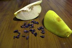 Ayva Çekirdeği Maskesi İle Kırışıklık ve Lekelere Son Baked Potato, Pear, Potatoes, Pasta, Baking, Fruit, Ethnic Recipes, Food, Masks