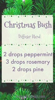 10 Christmas Essential Oil Blends for Beautiful Festive Aromas - Natural Mavens Bring the smell of Christmas into your home with this essential oil blend for the diffuser. Fresh and crisp it puts you right into the festive spirit. Essential Oils 101, Essential Oil Scents, Essential Oil Perfume, Essential Oil Diffuser Blends, Aromatherapy Oils, Young Living, Diffuser Recipes, Crisp, Doterra Oils