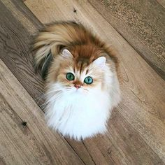 THIS IS PRETTY SMOOTHIE THE CAT FROM INSTAGRAM :D XOXOXOX
