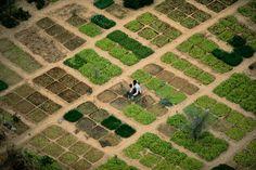 Market gardening near Timbuktu, Mali. Source: YannArthusBertrand.org