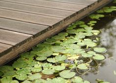 Deck Bamboo X-treme Moso de Hunter Douglas