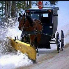 Amish winter—I live in Mennonite country with Amish not too far away. Amish People, Ontario, Ohio, Amish Family, Amish Culture, Holmes County, Amish Community, Pennsylvania Dutch, Lancaster Pennsylvania