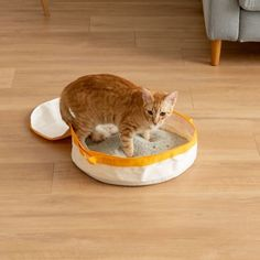 IRIS Travel Litter Pan, Yellow - Chewy.com Jumbo Litter Box, Cat Litter Pan, Crazy Cat Lady, Crazy Cats, Litter Box Covers, Litter Box Enclosure, Cat Light, Clumping Cat Litter, Pan Sizes