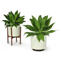 Case Study Planter w/ PlinthWhite - Modernica - in front of fireplace? HORNE - $149