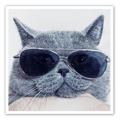 cutest-cat-kitten-FB-pic2.jpg 400×400 pixels