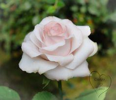 Pink rose  - Cake by Nina
